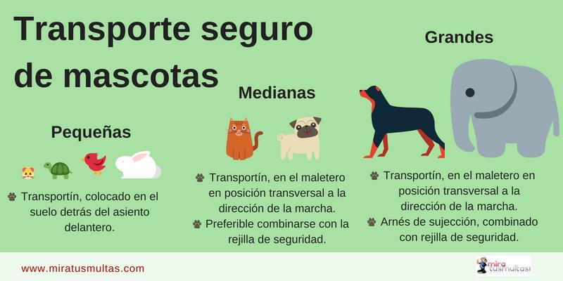 Transporte mascotas-Gráfico_miratusmultas