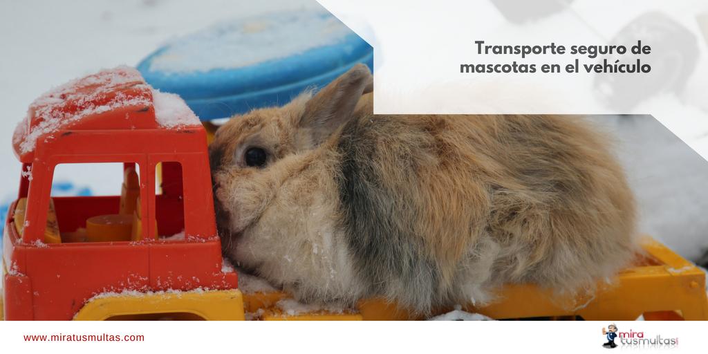 Transporte mascotas-Portada_miratusmultas